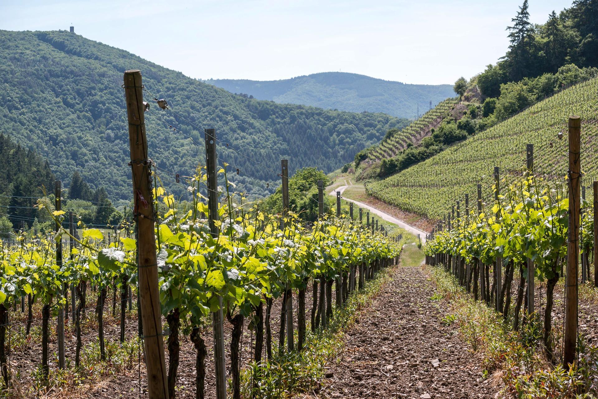 Das Ahrtal – roter Wein, schroffe Felsen und dem Teufel auf der Spur