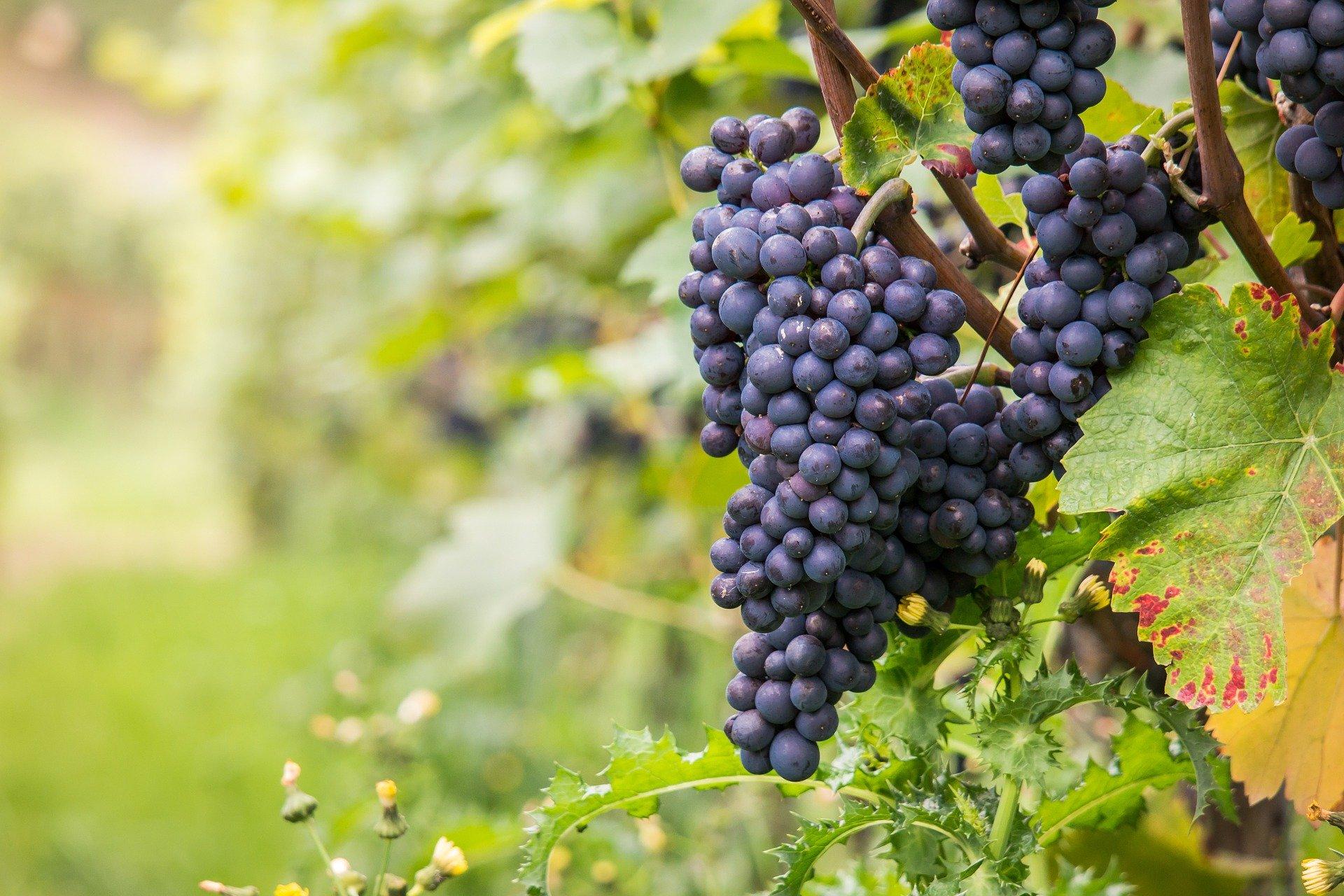 Drumherum – Das Ahrtal … auf den Spuren des Weines